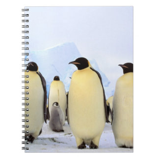 La Antártida, península antártica, mar de Weddell, Spiral Notebook
