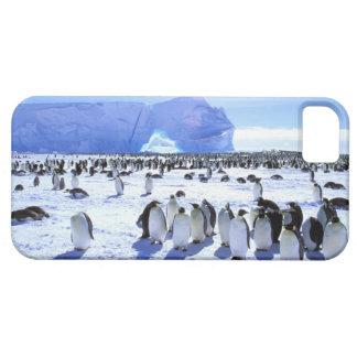 La Antártida, península antártica, mar de Weddell, iPhone 5 Case-Mate Coberturas