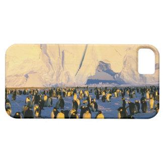 La Antártida, península antártica, mar de Weddell, iPhone 5 Cárcasas