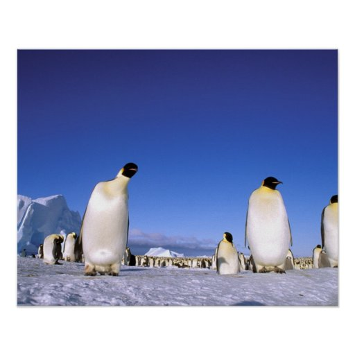 La Antártida, península antártica, mar de Weddell, Poster