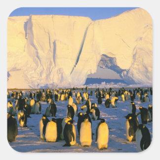 La Antártida, península antártica, mar de Weddell, Calcomania Cuadradas