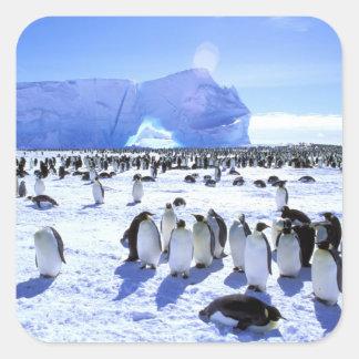La Antártida, península antártica, mar de Weddell, Colcomanias Cuadradas Personalizadas