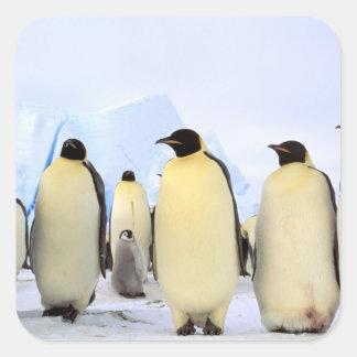 La Antártida, península antártica, mar de Weddell, Calcomanías Cuadradass Personalizadas