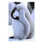 La Antártida, península antártica, mar de Weddell, Arte Fotografico