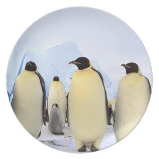 La Antártida península antártica mar de Weddell Plato
