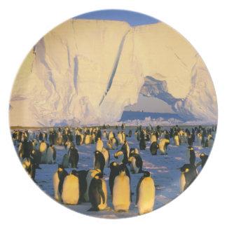 La Antártida península antártica mar de Weddell Plato De Comida