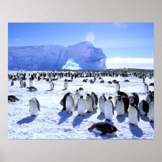 La Antártida, península antártica, mar de Weddell, Póster