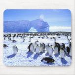 La Antártida, península antártica, mar de Weddell, Alfombrillas De Ratones