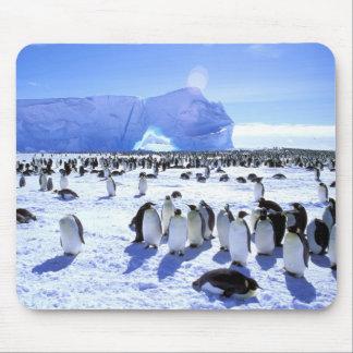 La Antártida, península antártica, mar de Weddell, Alfombrillas De Ratón