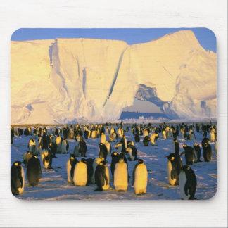 La Antártida, península antártica, mar de Weddell, Tapetes De Ratón