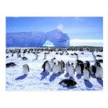 La Antártida, península antártica, mar de Weddell, Tarjeta Postal