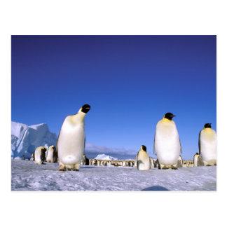 La Antártida península antártica mar de Weddell Tarjetas Postales