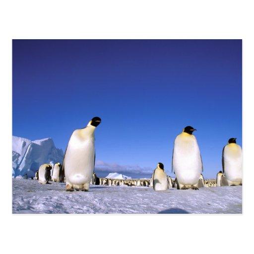La Antártida, península antártica, mar de Weddell, Tarjetas Postales