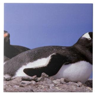 La Antártida, península antártica, Peterman Azulejo Cuadrado Grande