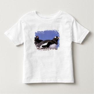 La Antártida, península antártica, Peterman Camisas