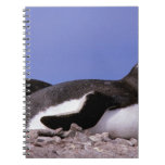 La Antártida, península antártica, Peterman Libros De Apuntes Con Espiral