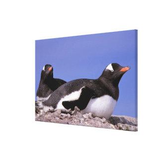La Antártida, península antártica, Peterman Lona Envuelta Para Galerias