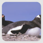 La Antártida, península antártica, Peterman Pegatina Cuadrada
