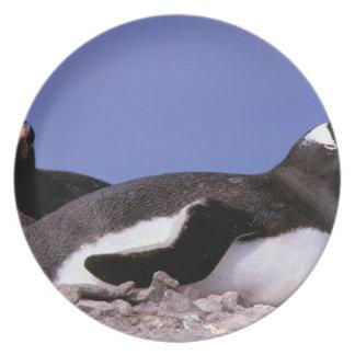 La Antártida península antártica Peterman Plato Para Fiesta