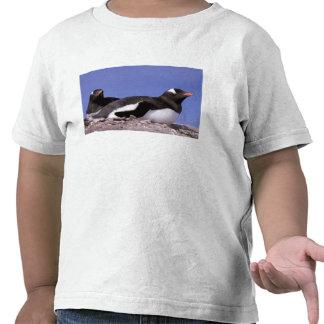 La Antártida, península antártica, Peterman Camisetas
