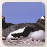 La Antártida, península antártica, Peterman Posavasos