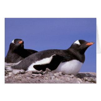 La Antártida, península antártica, Peterman Tarjeta De Felicitación