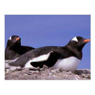 La Antártida, península antártica, Peterman Tarjeta Postal