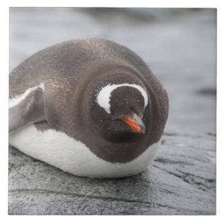 La Antártida, península antártica. Petermann Azulejo Cuadrado Grande