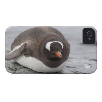La Antártida, península antártica. Petermann Case-Mate iPhone 4 Cárcasas