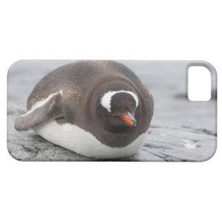 La Antártida, península antártica. Petermann Funda Para iPhone 5 Barely There