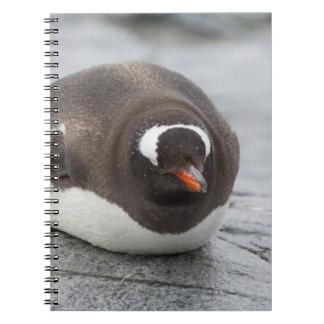 La Antártida, península antártica. Petermann Notebook