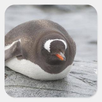 La Antártida, península antártica. Petermann Pegatina Cuadrada