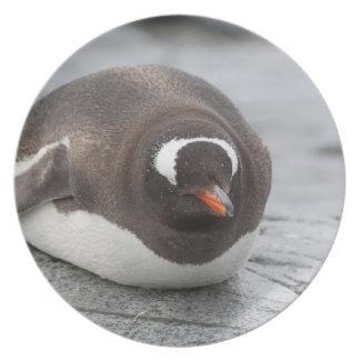 La Antártida península antártica Petermann Plato Para Fiesta