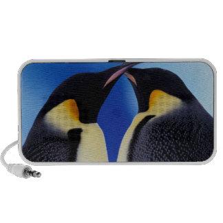 La Antártida, pingüino de emperador (Aptenodytes 2 iPod Altavoz