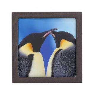 La Antártida pingüino de emperador Aptenodytes 2 Caja De Joyas De Calidad