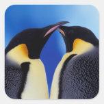 La Antártida, pingüino de emperador (Aptenodytes 2 Calcomanías Cuadradass