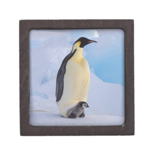 La Antártida pingüino de emperador Aptenodytes Caja De Recuerdo De Calidad