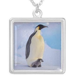 La Antártida, pingüino de emperador (Aptenodytes Joyerias
