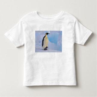 La Antártida, pingüino de emperador (Aptenodytes Playeras