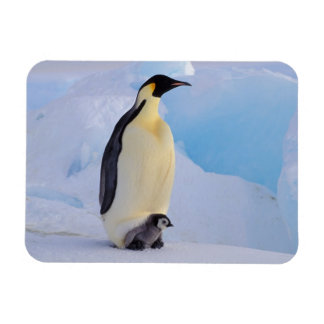 La Antártida, pingüino de emperador (Aptenodytes Rectangle Magnet