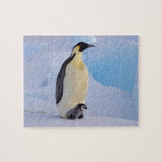 La Antártida, pingüino de emperador (Aptenodytes Rompecabezas Con Fotos