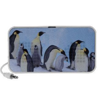 La Antártida, pingüino de Emporer ((Aptenodytes Altavoz De Viaje