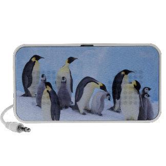 La Antártida, pingüino de Emporer ((Aptenodytes Mini Altavoces