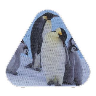 La Antártida, pingüino de Emporer ((Aptenodytes Altavoz