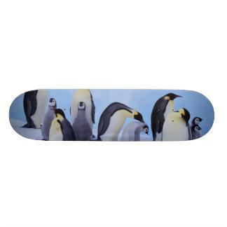 La Antártida, pingüino de Emporer ((Aptenodytes Skate Board