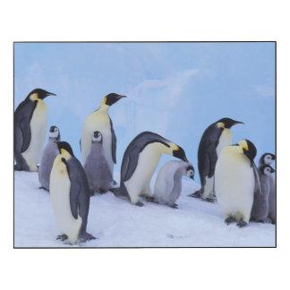 La Antártida, pingüino de Emporer Impresión En Madera