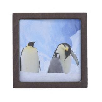 La Antártida Pingüinos y polluelo de emperador Caja De Regalo De Calidad
