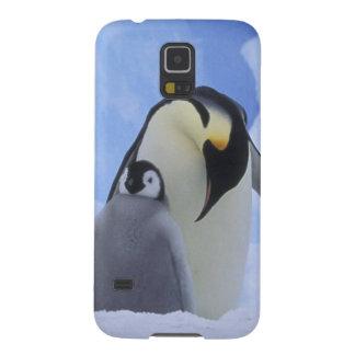 La Antártida. Pingüinos y polluelo de emperador Carcasas Para Galaxy S5