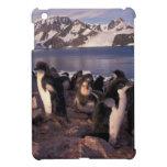 La Antártida, polluelos del pingüino de Adelie