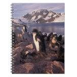 La Antártida, polluelos del pingüino de Adelie Cuadernos